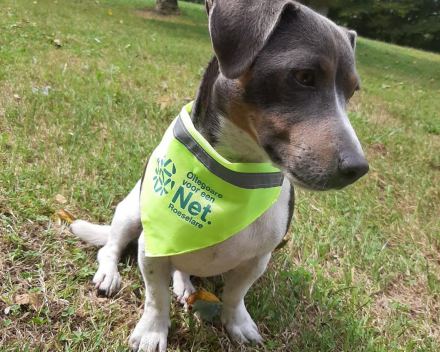 Hond met bandana